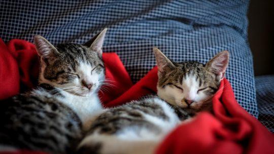 À qui faire garder son chat durant les vacances ?