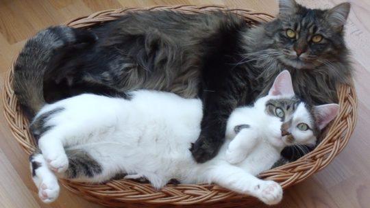 Faire un panier pour chat DYI, aussi simple qu'agréable !