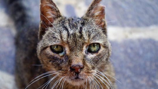 Les aliments destinés à un chat malade